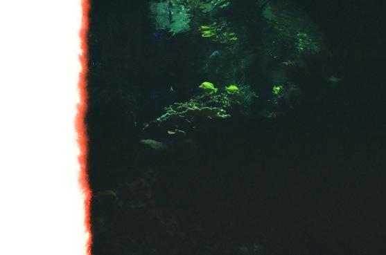 Glowy fish!
