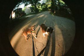 Dogs On the Walk 1