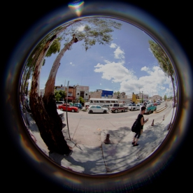 fisheye jodi phone
