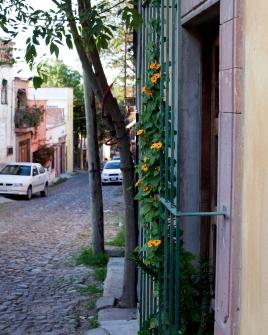 flowering yellow vine