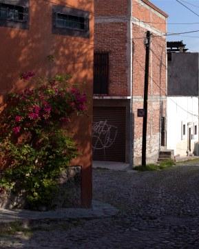 bougainvillea and brick