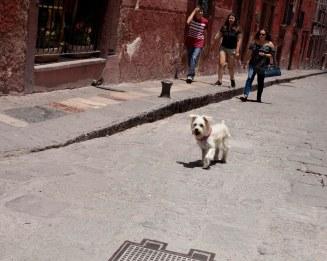 dog on a mission