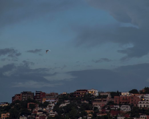 in which a large white bird flies above san miguel