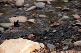 hot springs butterfly for blog