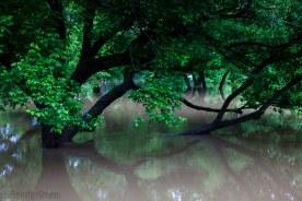 more underwater trees