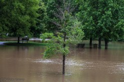 small tree now underwater