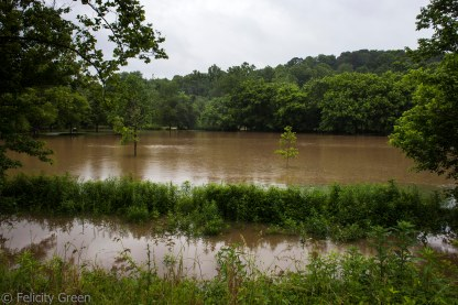 see the line of trees waay in the background? That's the ordinary edge of the river.