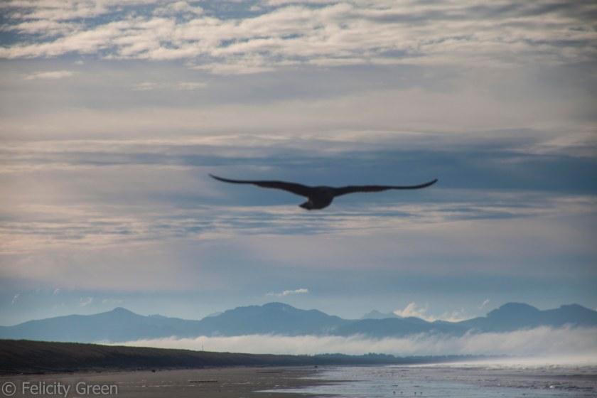 blurry seagull